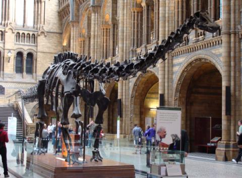 Diplodocusskelet in het Natural History Museum