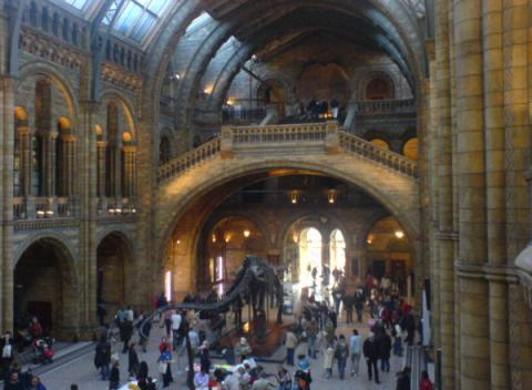 Hal van het Natural History Museum